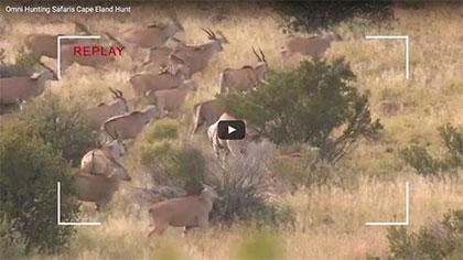 Cape Eland Hunt