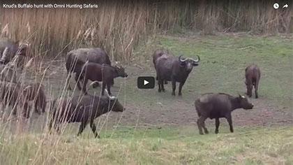 Knud's Cape Buffalo Hunt